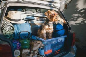 Last Minute Orlando Summer Vacation With Your Family Dog